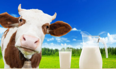 https://kendamil.cz/wp-content/uploads/2017/11/Benefits-Of-Cow-Milk-According-To-Ayurveda-376x224.jpg